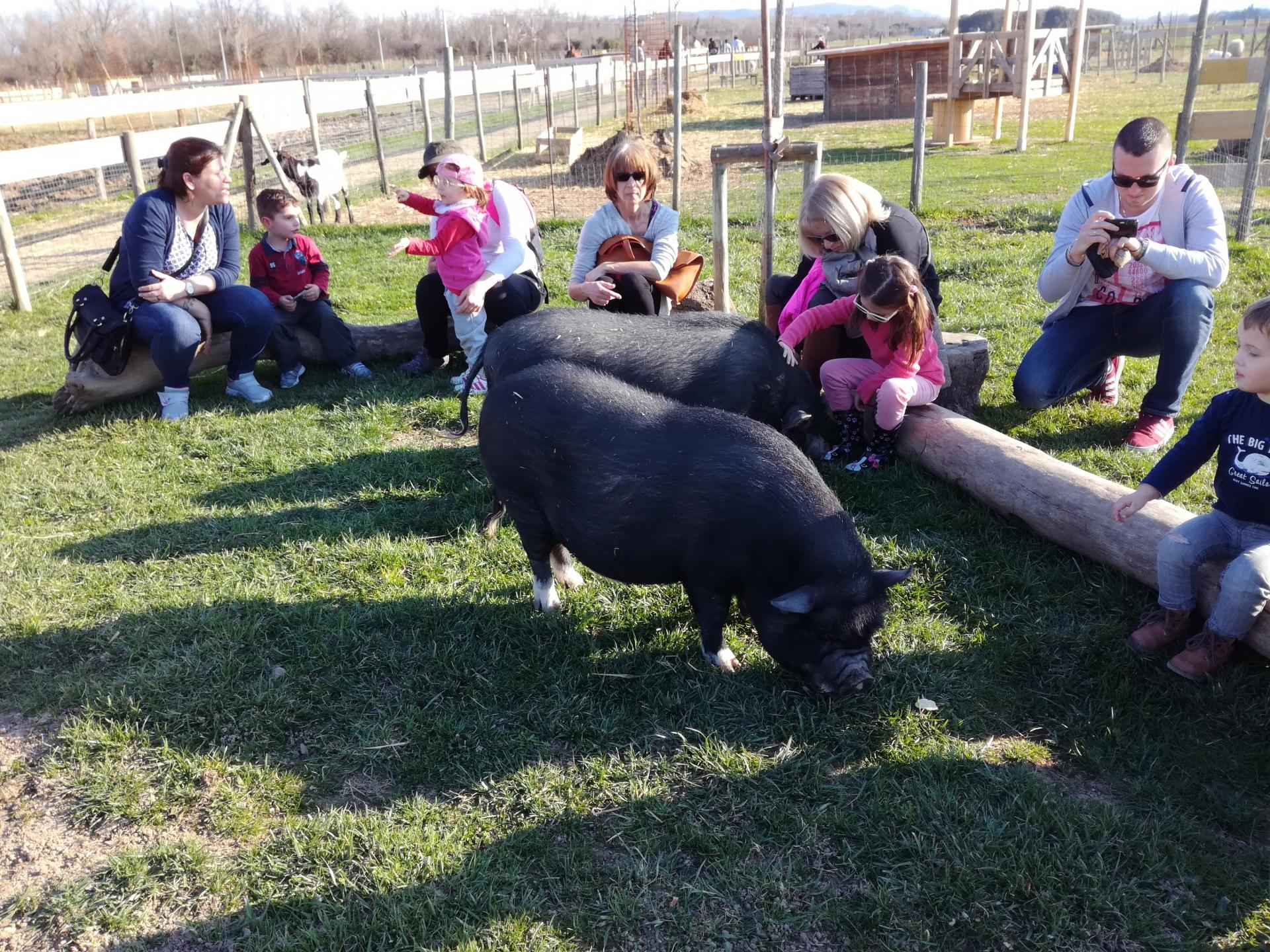 Groupe cochon